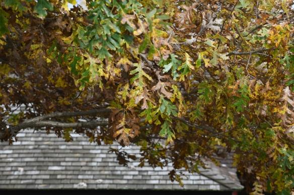Taliesin fall 4.jpg